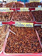 Insekten Essen Kochkurse