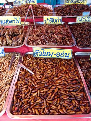 Insekten essen Kochkurs