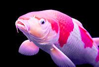 Dinner unter Wasser Unterwasserrestaurant